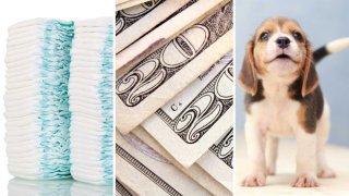 Diapers, cash, puppy