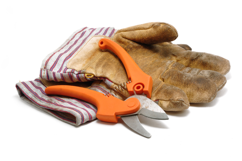 030810 Pruning Shears and Leather Gloves
