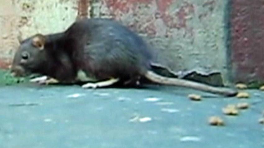 05-30-2014-rat-th