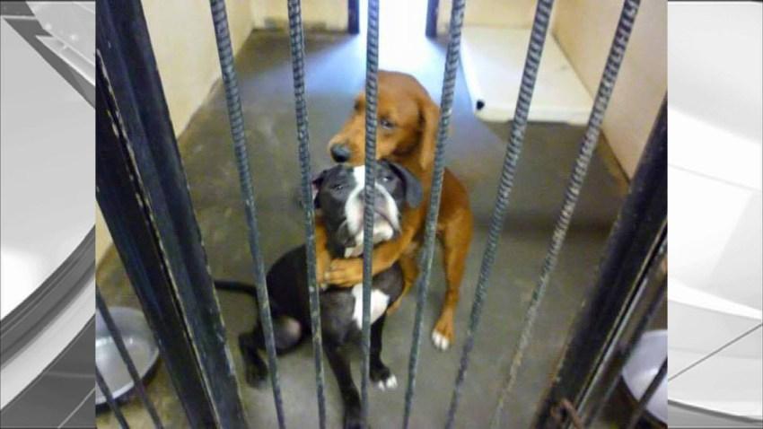 072215 hugging dogs saved georgia