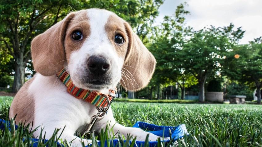 20151009 Cute Dog