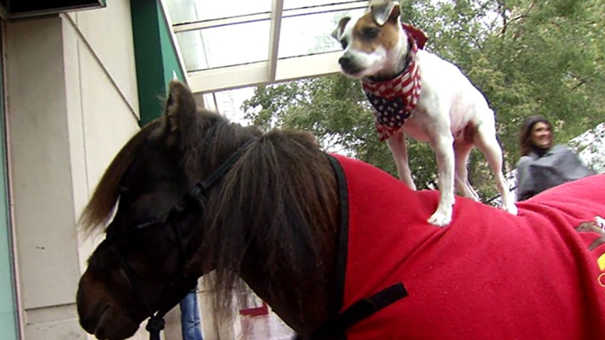 20161027 Dog and Pony 4
