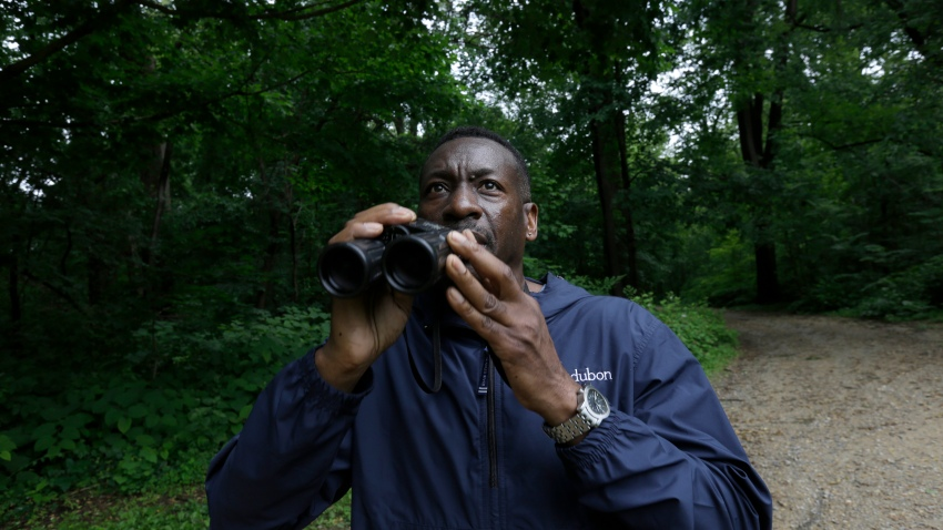 Keith Russell, program manager of urban conservation at Audubon Pennsylvania, lowers his binoculars while conducting a breeding bird census, at Wissahickon Valley Park Friday, June 5, 2020 in Philadelphia.