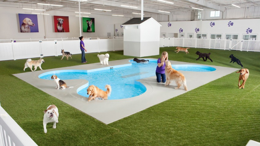 NYC Airport Animal House