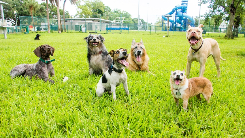 Six dogs in a dog park, United States
