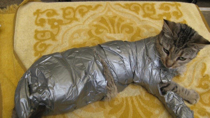 Duct Taped Cat PSCPA