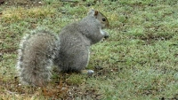 Uninvited Squirrel Wreaks Havoc in Home While Owners Away on Vacation