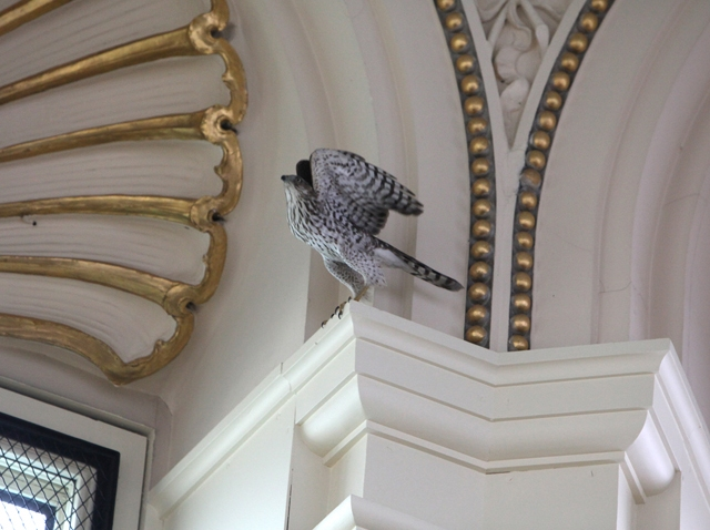 Library of Congress Hawk
