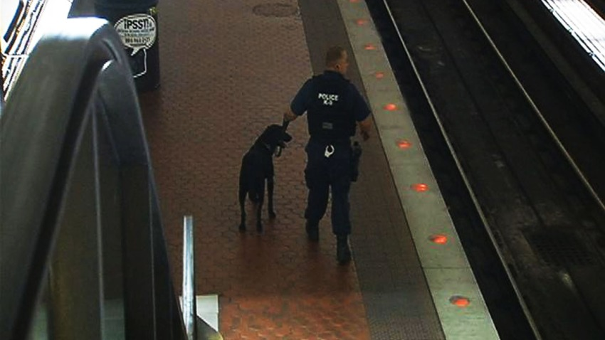 Metro Bomb Sniffing Dogs Training 092513