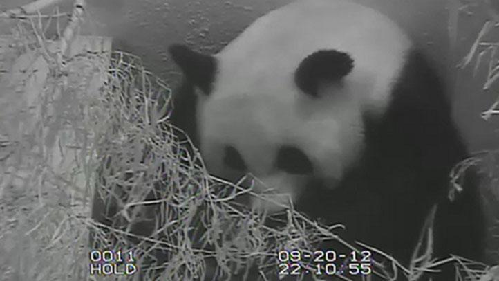 PandaGroom