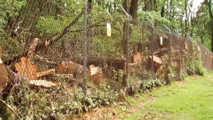 Pepco Tree Cutting Audubon Chevy Chase