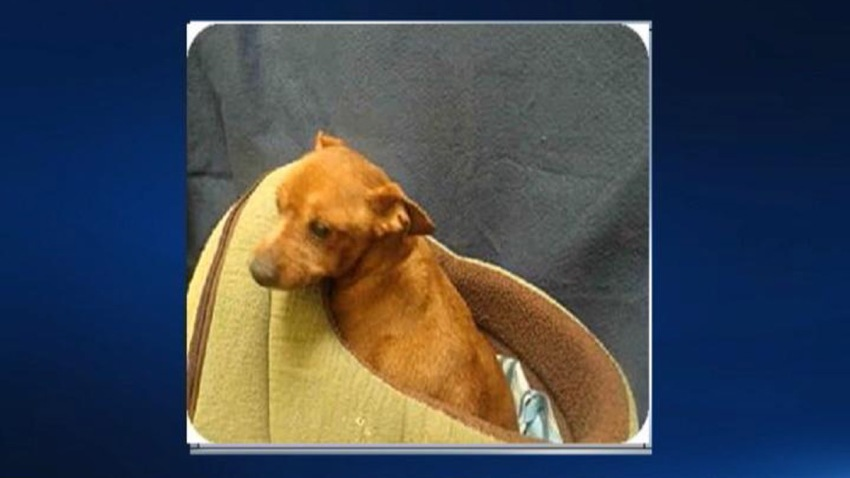 Prince George's County Dog Dumped in Dumpster