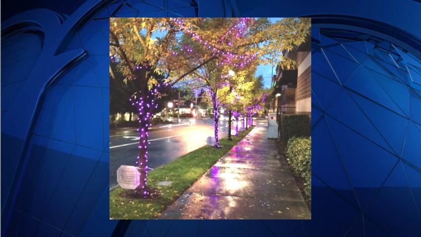 Purple Lights Nights