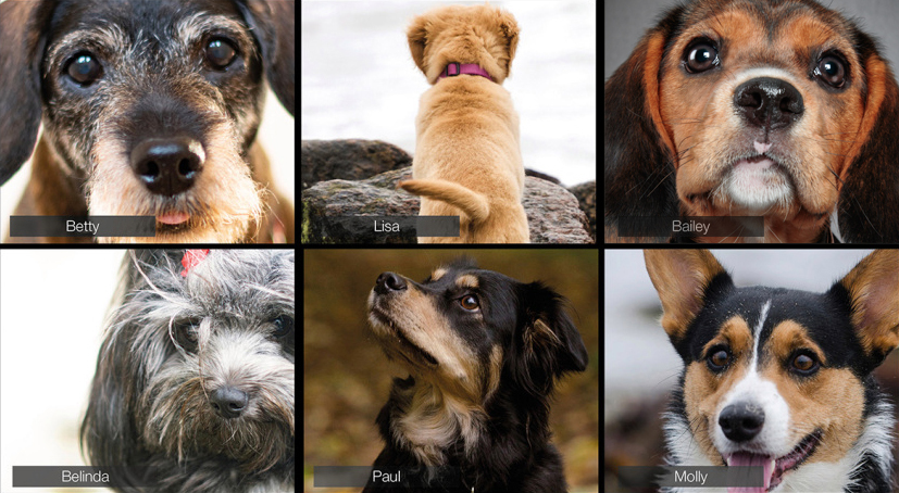 "A composite image shows various dogs on a ""conference call."""