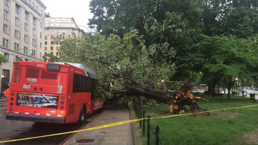 Tree on Metrobus 060115