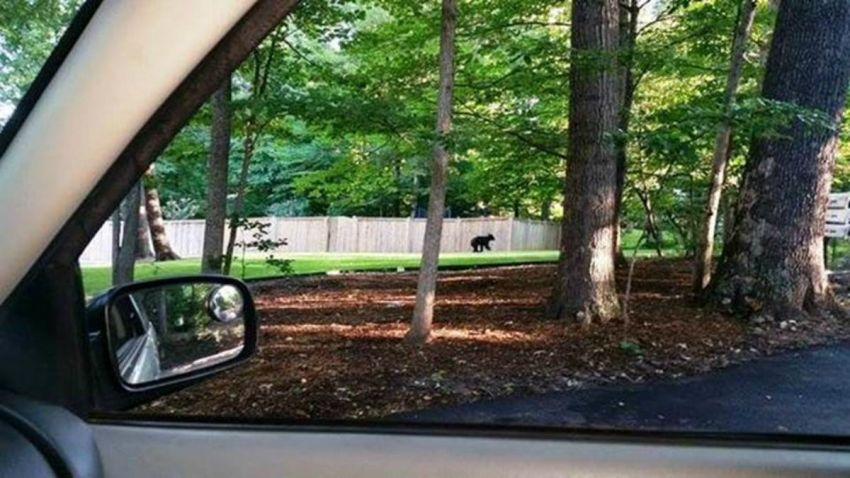 bears in Virginia