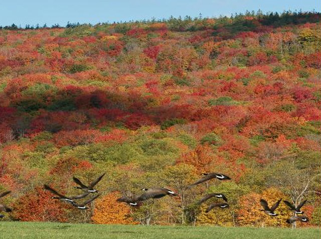canaan valley by dave lesher2