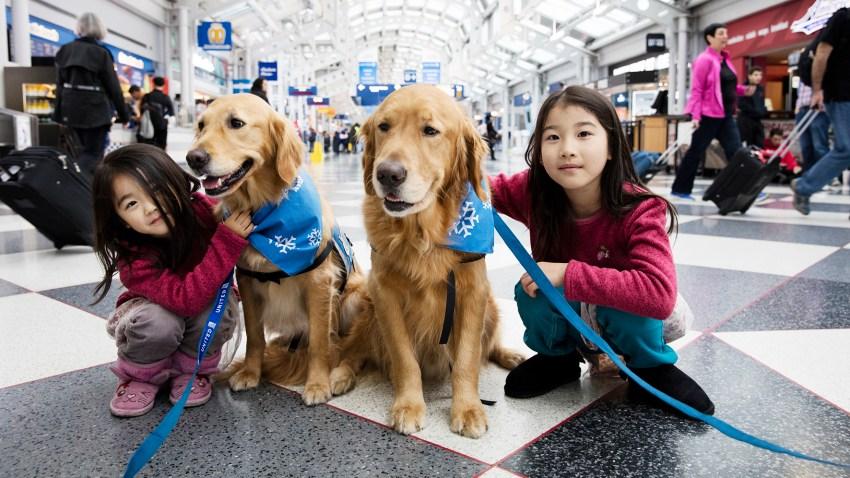 comfort dogs united