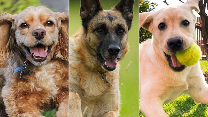 dog-breed-quiz-thumb