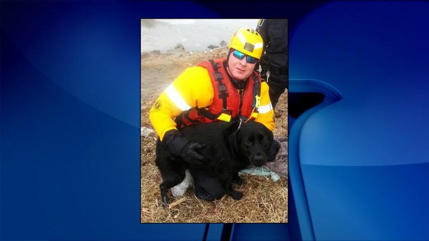 dog-rescued