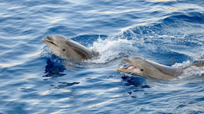 dolphinshutter