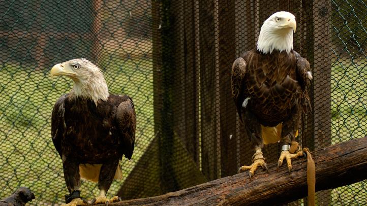 eagles-3212736