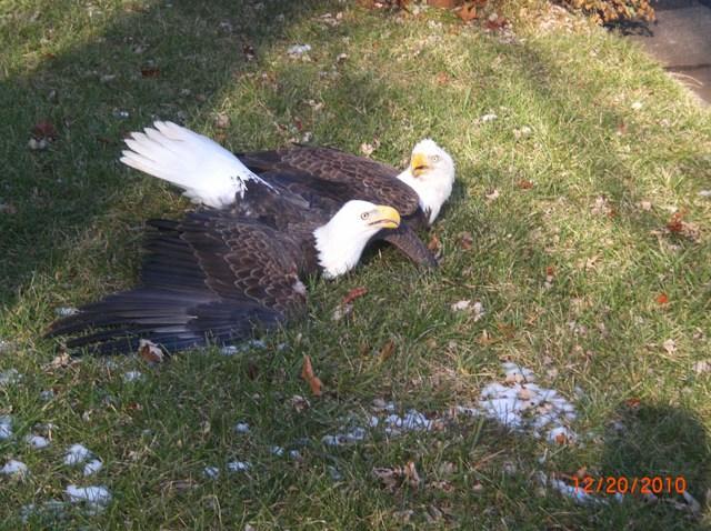 eagles_sterling