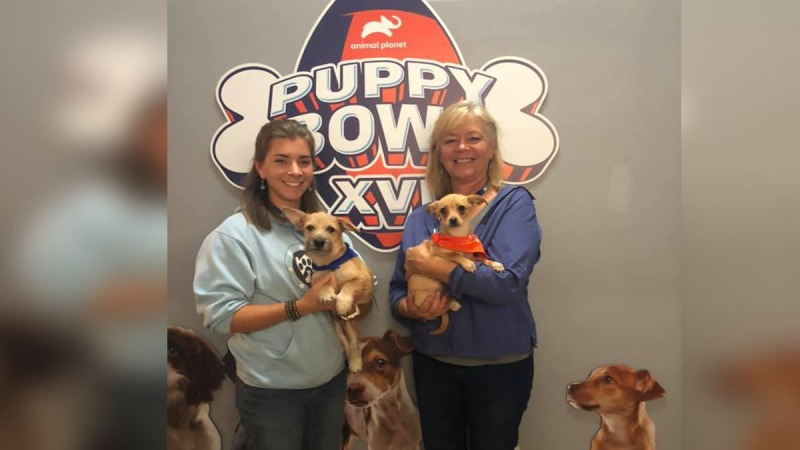 Alexandria Rescue Dogs Play in Puppy Bowl