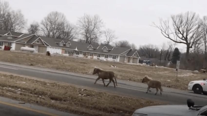horse chase