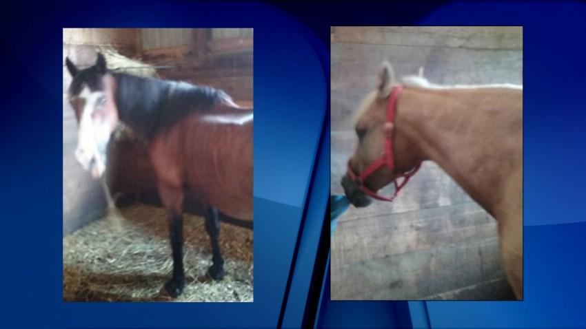 horses need a home