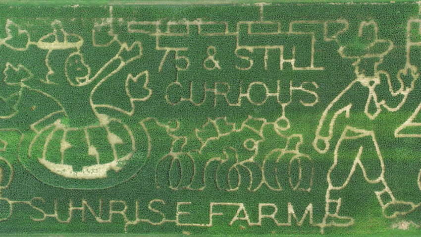 md sunrise farm maze