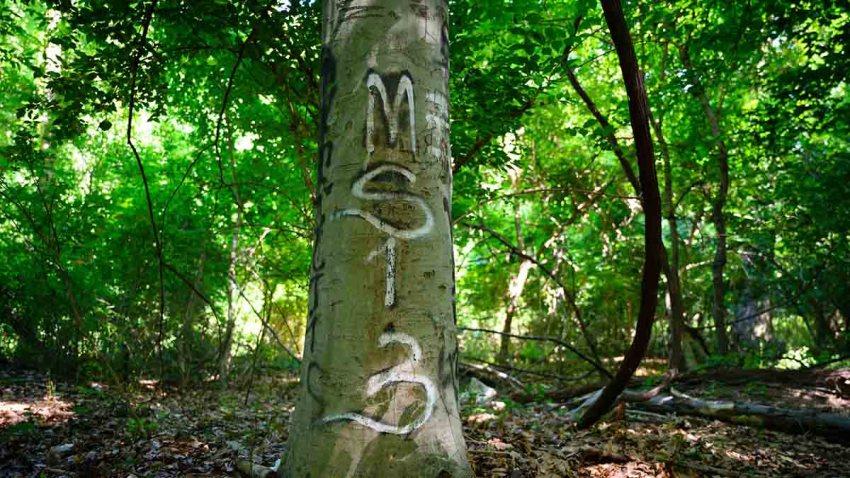 MS-13 graffiti
