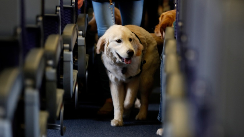 Service Dogs Airport