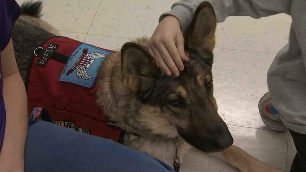 Therapy Dogs Help Virginia Elementary Students Cope With Loss of Classmate