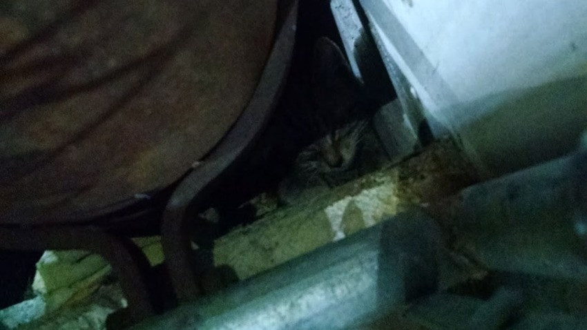 trapped cat at doctors community hospital