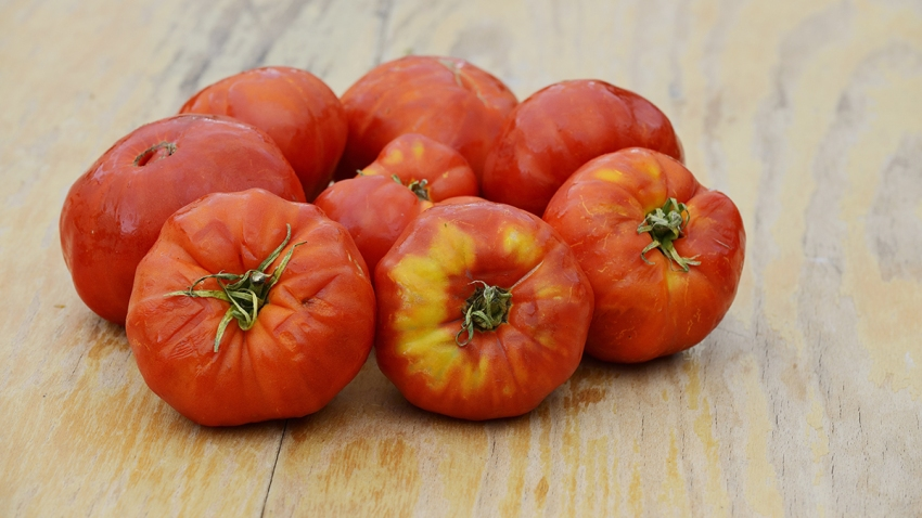 ugly tomato shutterstock_375383059