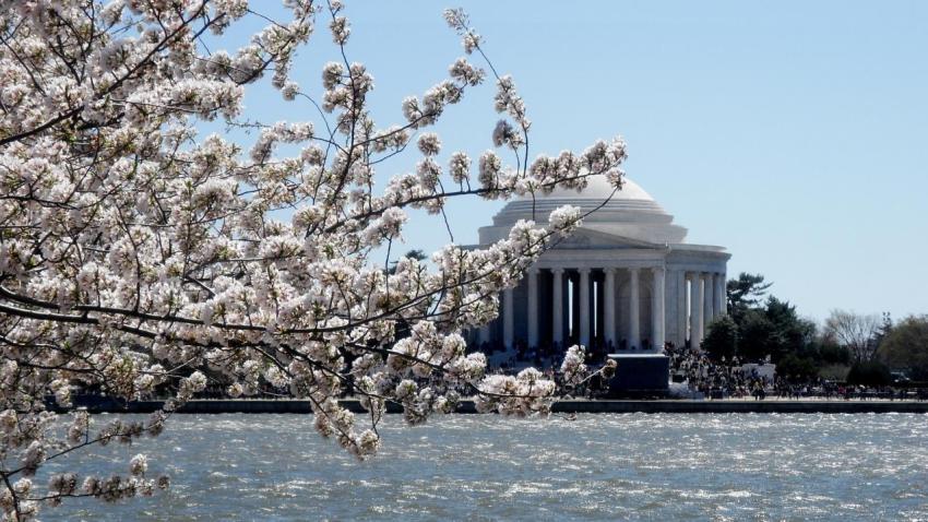[UGCDC] Cherry Blossoms on the Potomac
