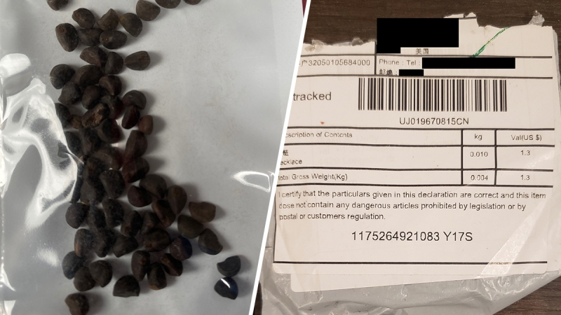 Photos: Mystery Seeds Mailed From China