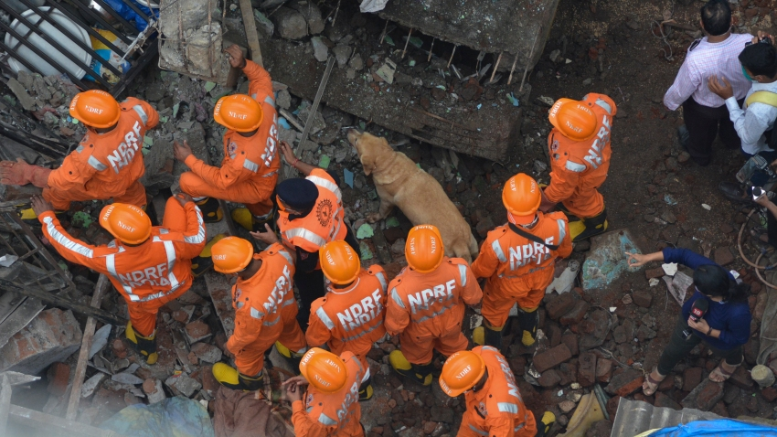 Rescuers with the help of a sniffer dog look for survivors after a residential building collapsed in Bhiwandi in Thane district, a suburb of Mumbai, India