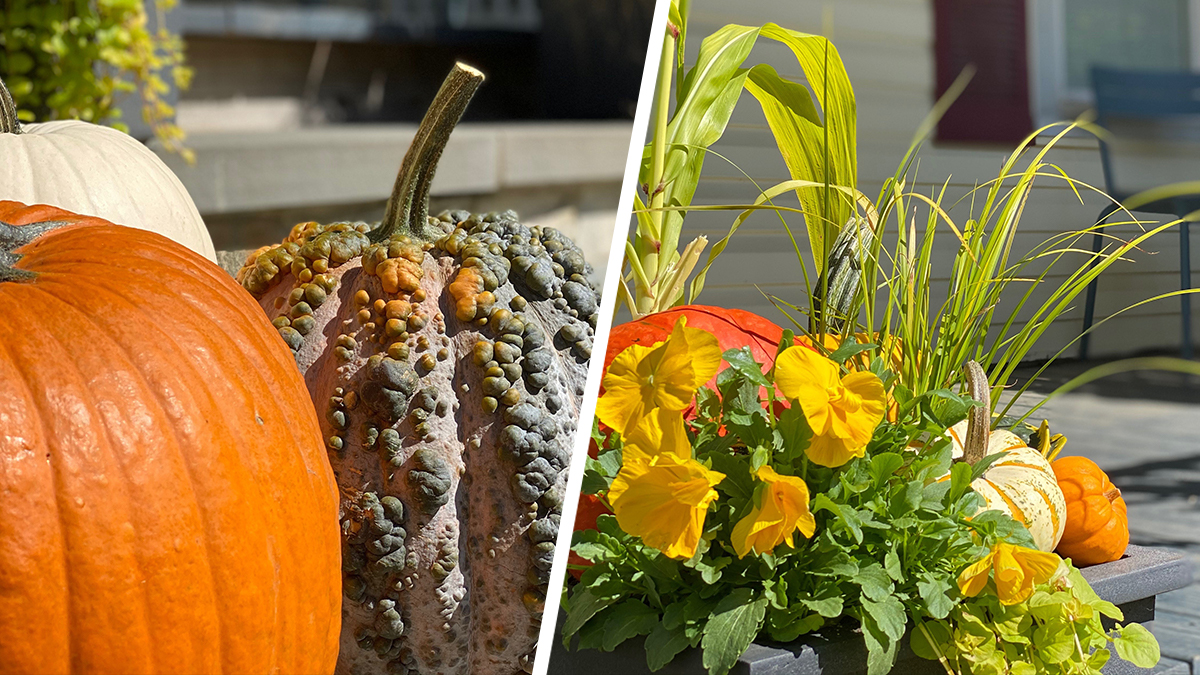 Fall Decor: How to Decorate With Pumpkins This Season
