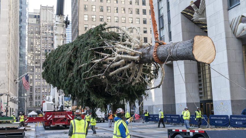 A 75-foot Christmas Tree from Oneonta is being installation at the Rockefeller Plaza. The Christmas Tree has been donated by Daddy Al's General Store in Oneonta, NY. The tree is 75-foot tall, 45-foot in diameter and weighs 11-tons.