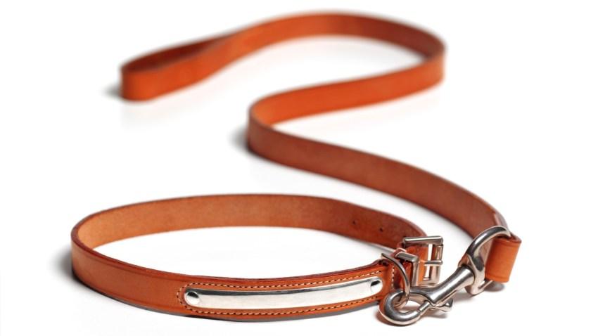 empty dog leash