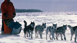 The Iditarod Sled Dog Race In Alaska, United States -