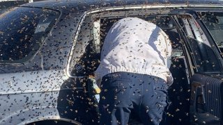 Las Cruces Fire Department firefighter Jesse Johnson clears an estimated 15,000 bees from a parked car in Las Cruces, New Mexico, on March 28, 2021.