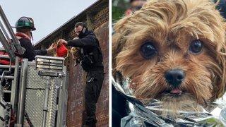dog rescue potomac river