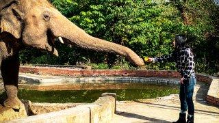 Cher feeding elephant Kaavan