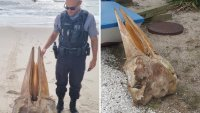 Gigantic Partial Skull Sparks Curiosity After Washing Up on Jersey Shore