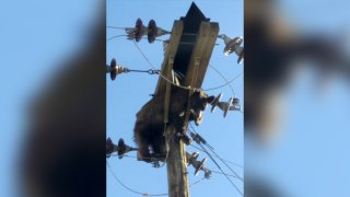 This photo provided by Werner Neubauer shows a bear tangled in power pole wires in Willcox, Arizona, on June 7, 2021.