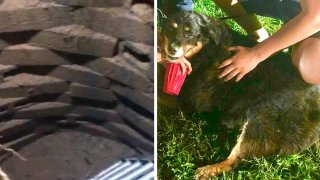 dog rescued from well