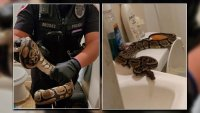 Texas Woman Finds Big Snake in Her Bathroom Overnight